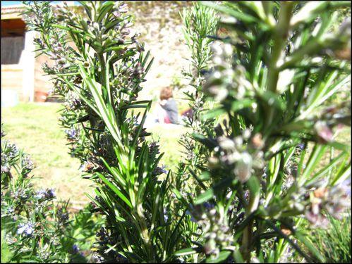 Jardin 1518