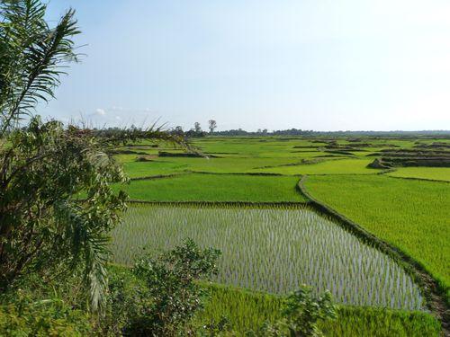 rizière vue du train