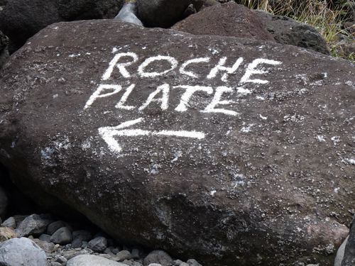 37 direction Roche Plate
