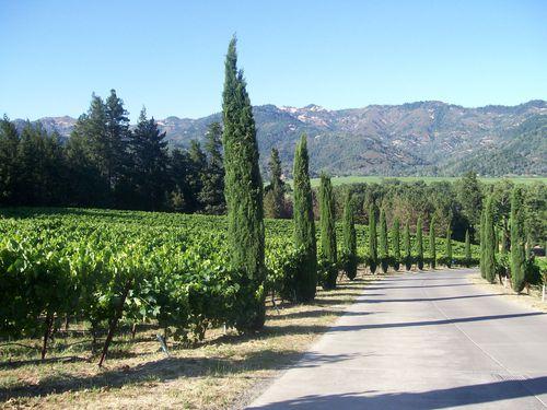 Napa vineyard (17)
