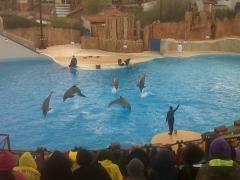 les-dauphins-de-baptiste.jpg