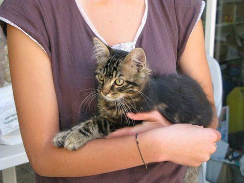 Le-chat-et-la-jeune-fille-par-louis-monier.jpg
