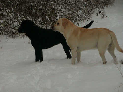 les 2 males neige 2012