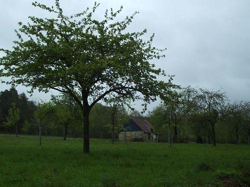 normandie-pluie.jpg