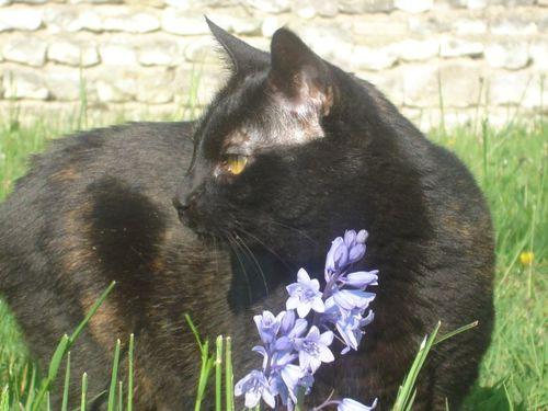 Doudou fleur bleue