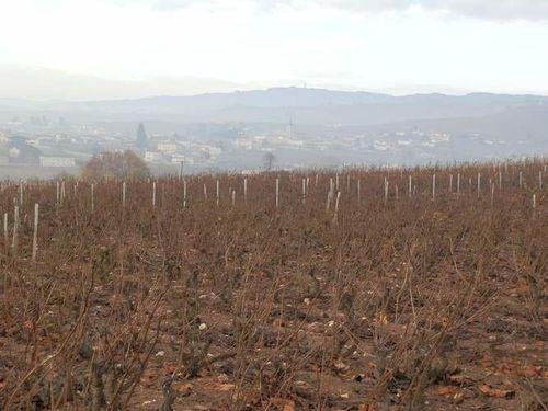 2011-11-20-Rando.Beaujolais-Fleurie 009