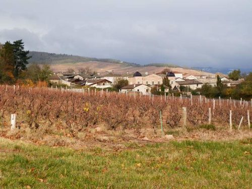 2013-11-24-Rando.Chenas-Beaujolais 007