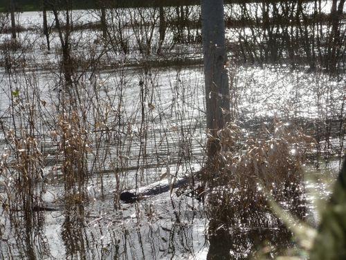 inondation-2014-029petite.jpg