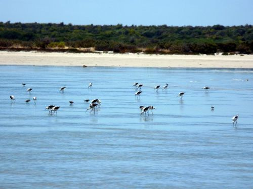2012-01-05 Coorong Wilderness Lodge (08)