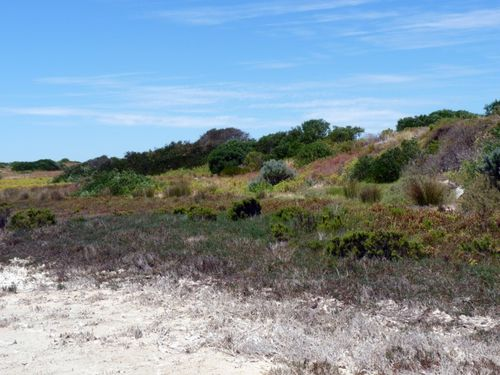 2012-01-05 Coorong Wilderness Lodge (16)