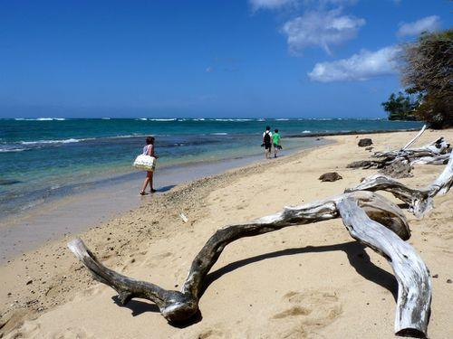 2011-04-12 Oahu (17)