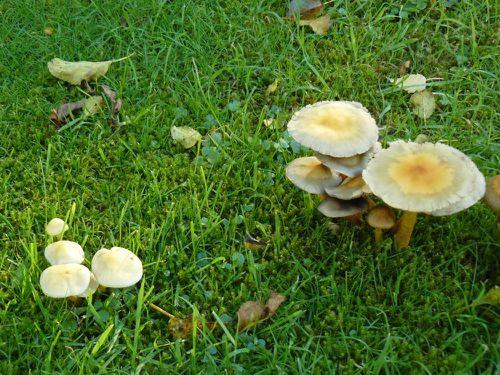 couleurs d'automne 30-10-2012 -1