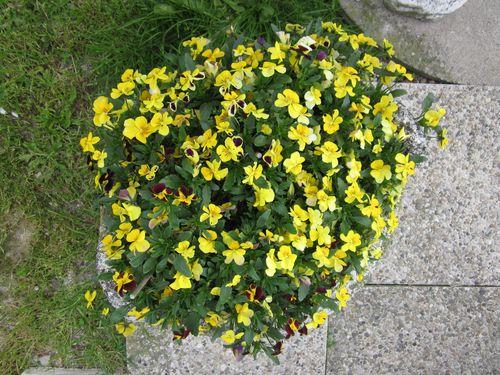 notre-jardin 0659