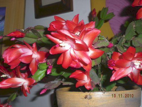 floraison d'automne13 novembre