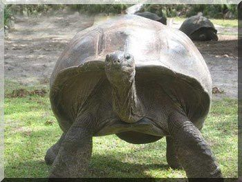 tortue2yv8