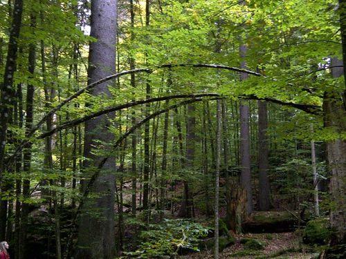 wunderbarer Urwald