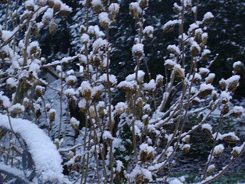 DSC01527-neige.jpg
