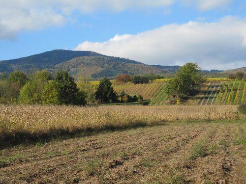 champs vignes automne