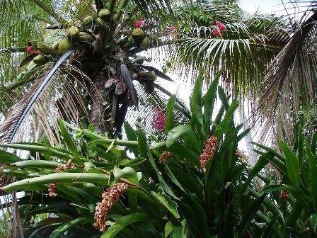 8 Végétation luxuriante