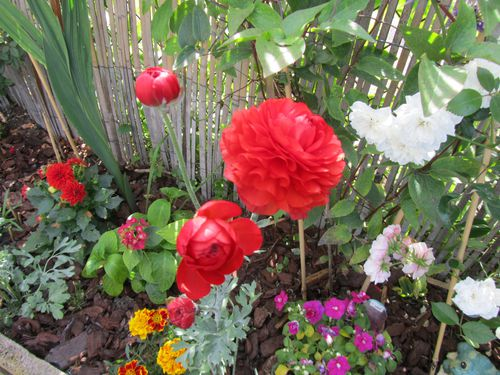 Fleurs-2013 0109