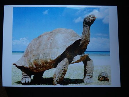 groupe 11a carte denise siry pour tortue c