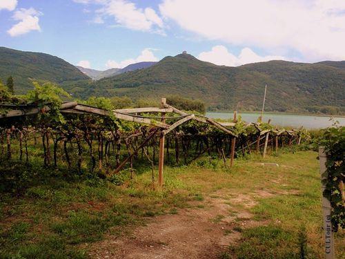 Kalterer-Route-des-vins.JPG