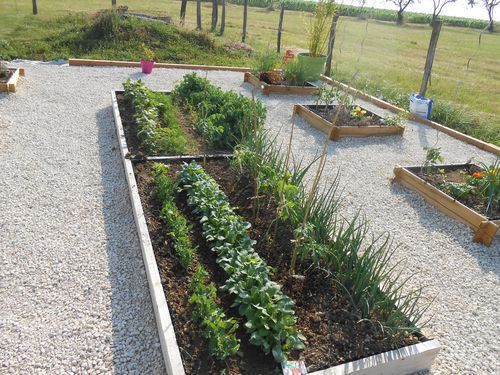 Potager-carre-7.JPG
