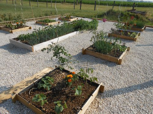 potager-carre-5.JPG