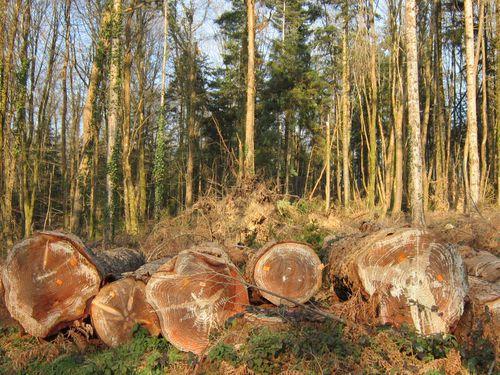 244- 5 arbres