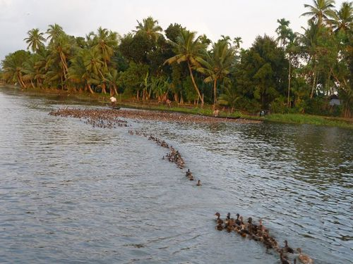 Backwaters canards 1