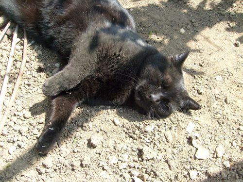 Mon chat : Noiraud le 11/04/2010 - 3