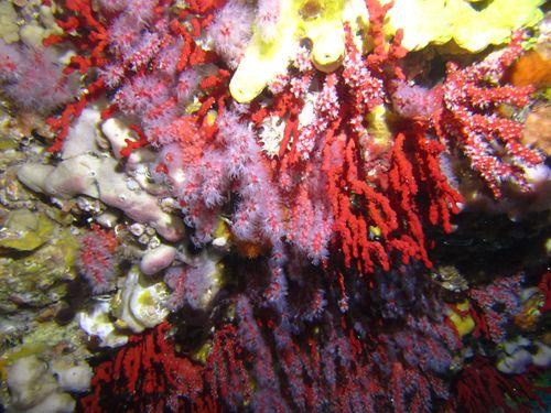 corail2ssi
