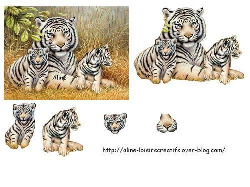 Tigres-blanc.jpg