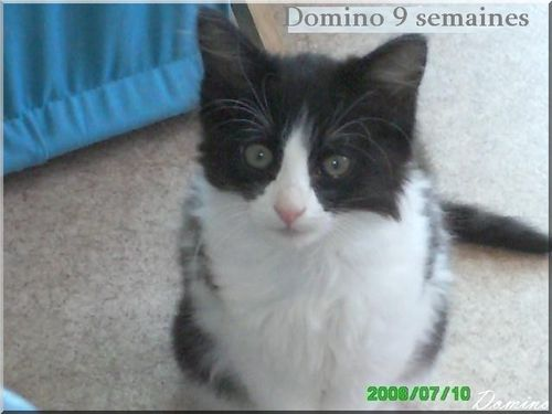 domino-3-mois-copie-1.jpg