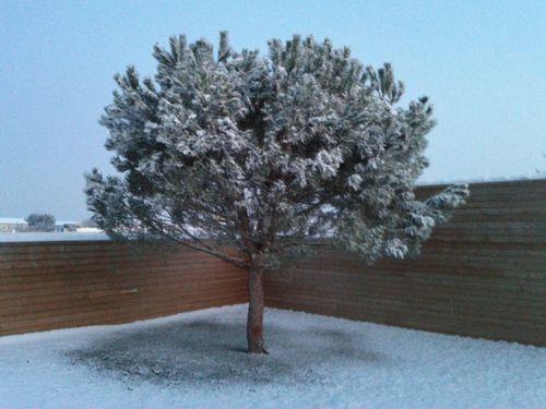 La-neige-20120207_080015.jpg