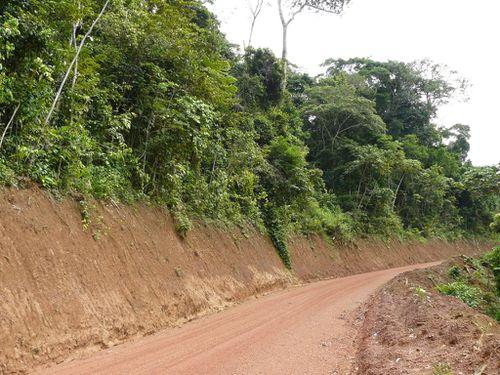 bouenza-moussanda-route-foret
