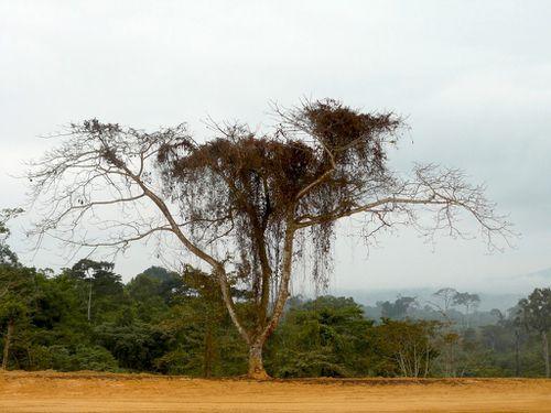 P-arbre-chantier