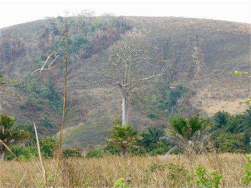 sossi-colline-savane