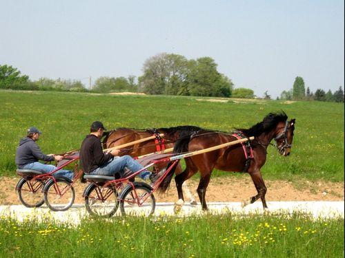 entrainement-des-chevaux--Resolution-de-l-ecran-.jpg