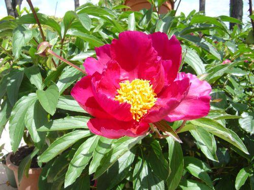 Notre-jardin04215.jpg
