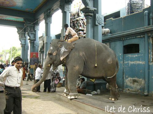 ELEPHANT TEMPLE PONDICHERI IDC