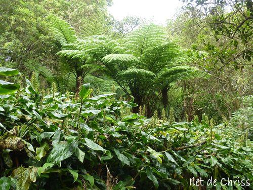 RANDO ILET ALCIDE (91) dans la forêt