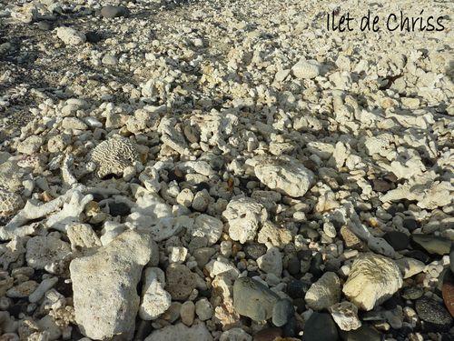 Les coraux de la plage