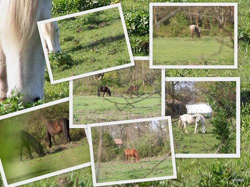 chevaux a cassy