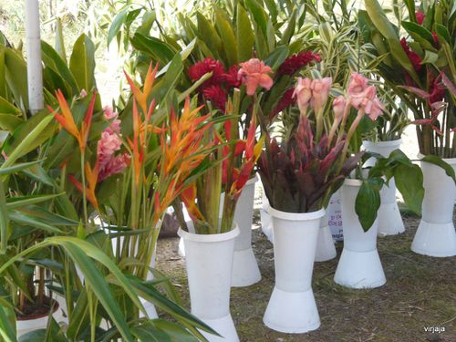 stand fleurs exotiques