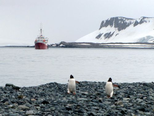 Antarctique 2239