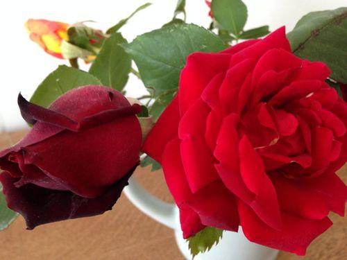Roses Septèmes 1