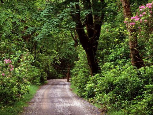 600_2-Kylemore_Wood_Road_County_Galway_Ireland.jpg