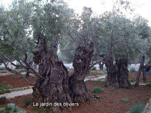 Le-jardin-des-Oliviers-.JPG