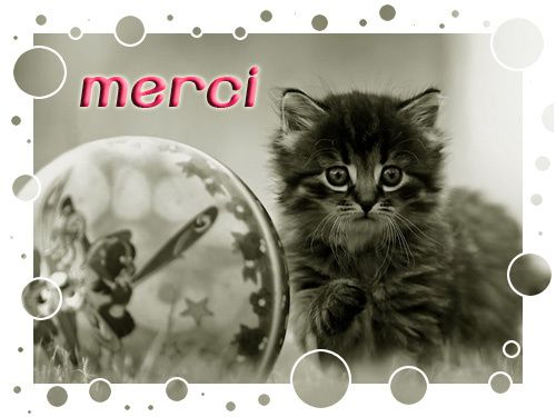 merci-chat.jpg